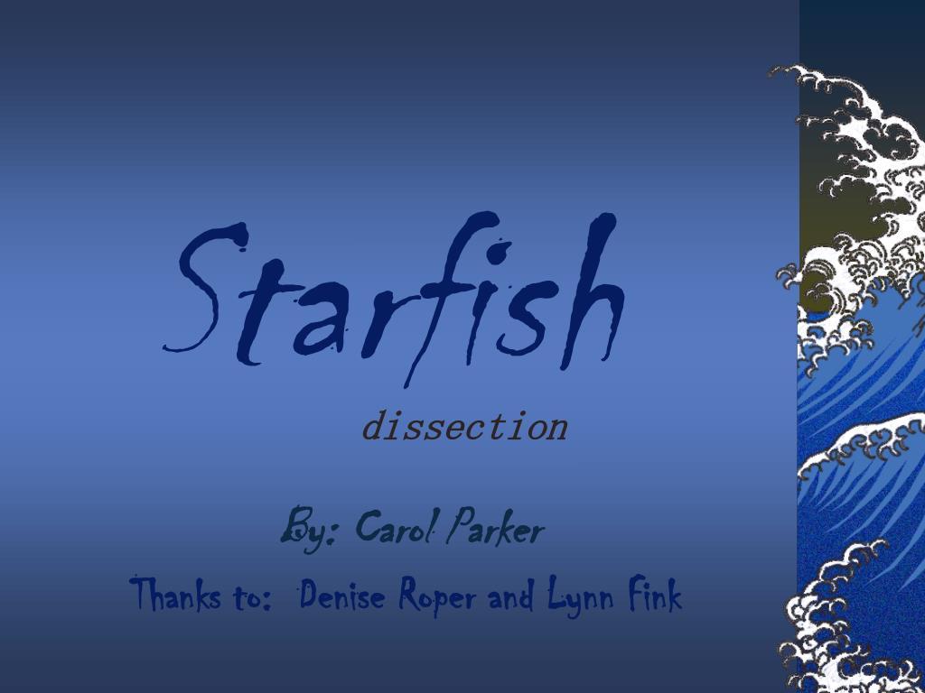 starfish l.