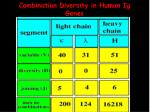 combination diversity in human ig genes