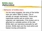 brittle stars ophiuroidea29