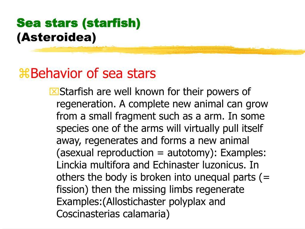 Sea stars (starfish)