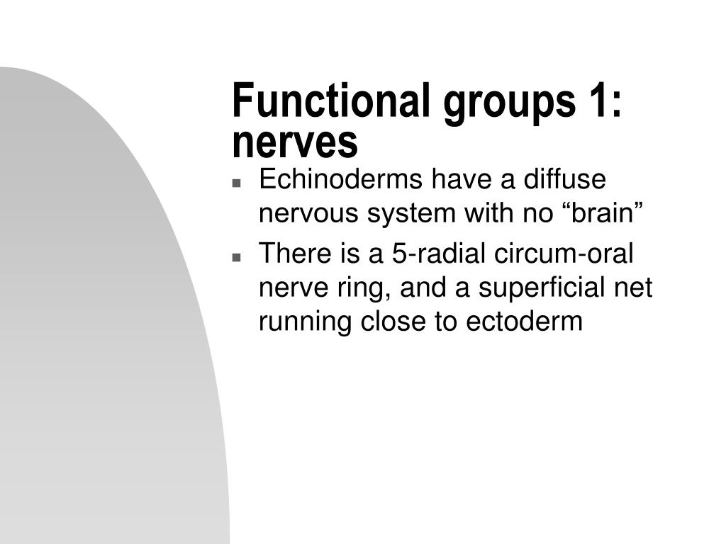 Functional groups 1: nerves