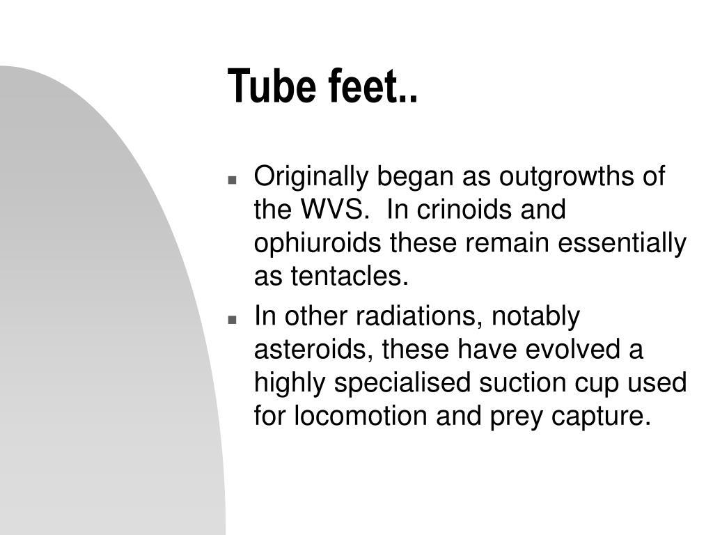 Tube feet..