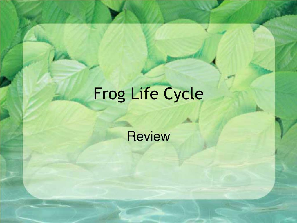 frog life cycle l.