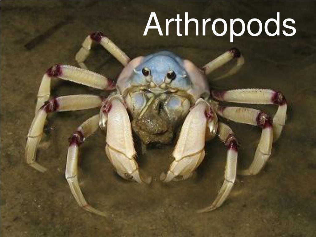 arthropods l.