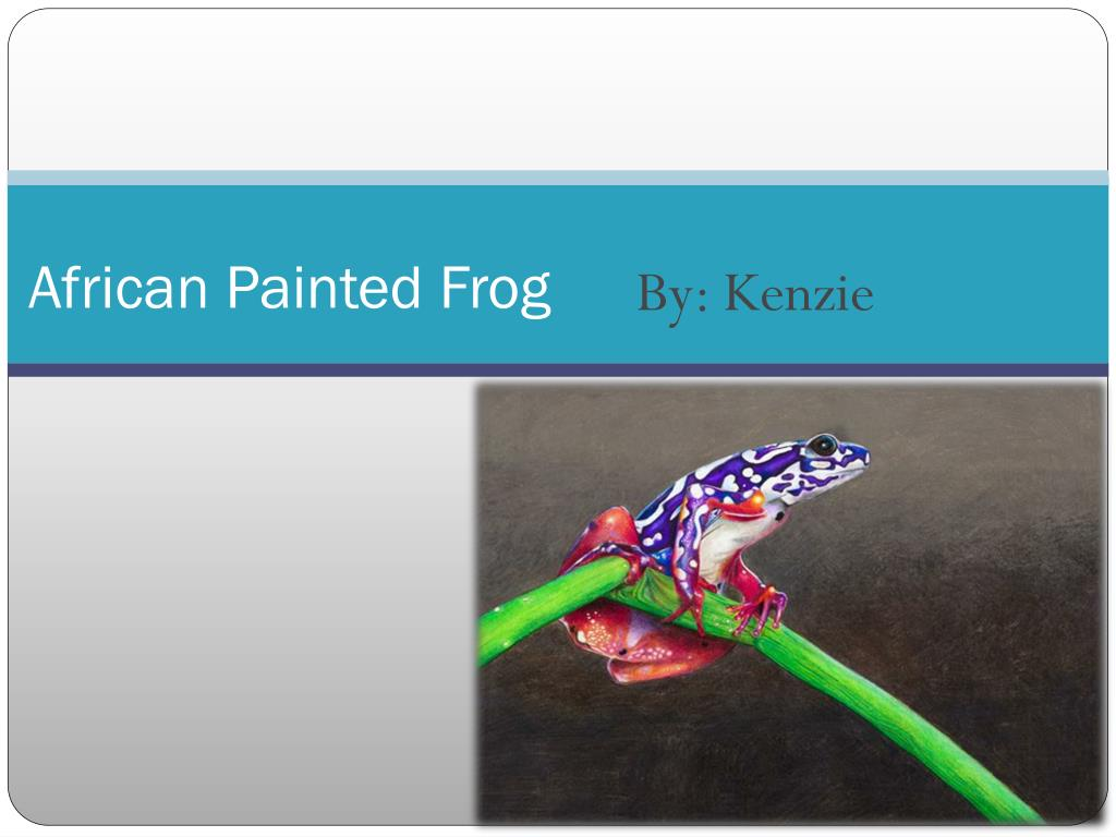 african painted frog l.