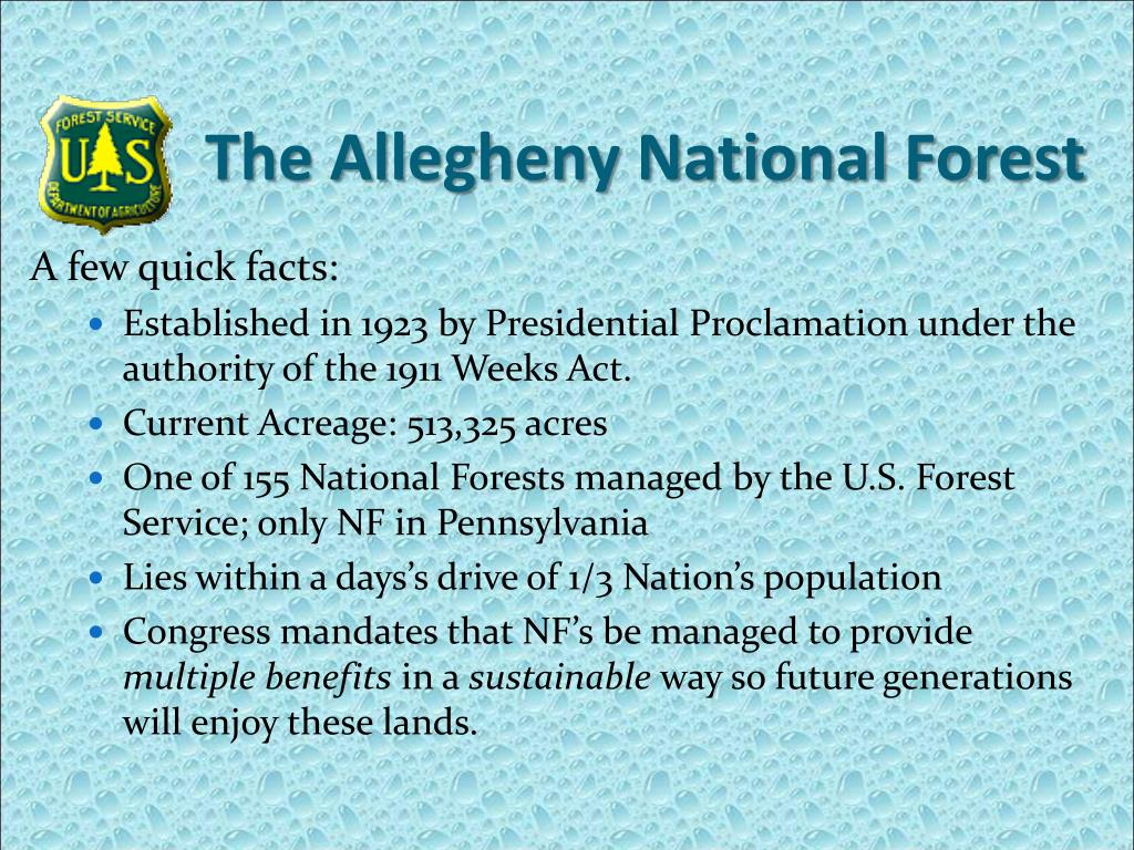 the allegheny national forest l.