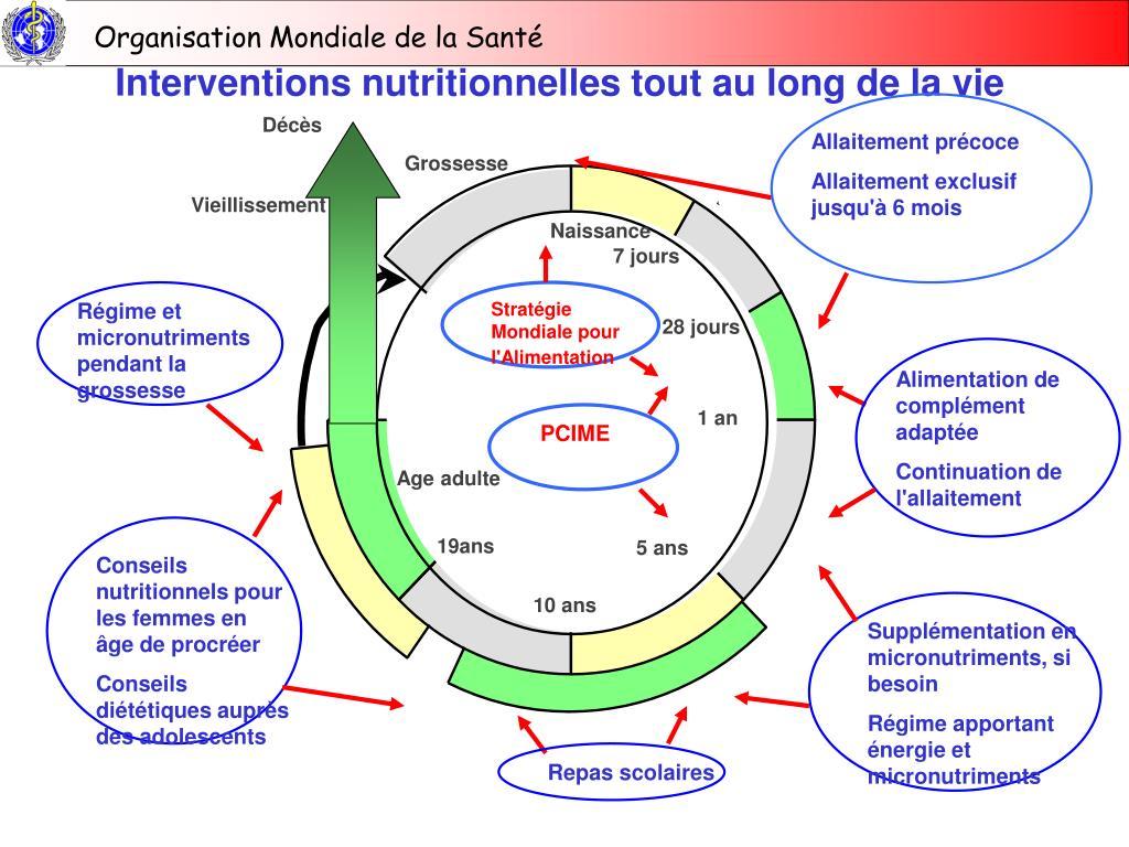 Interventions nutritionnelles tout au long de la vie