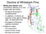 decline of whitebark pine
