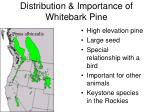 distribution importance of whitebark pine