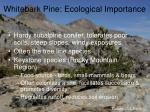 whitebark pine ecological importance