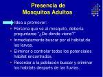 presencia de mosquitos adultos