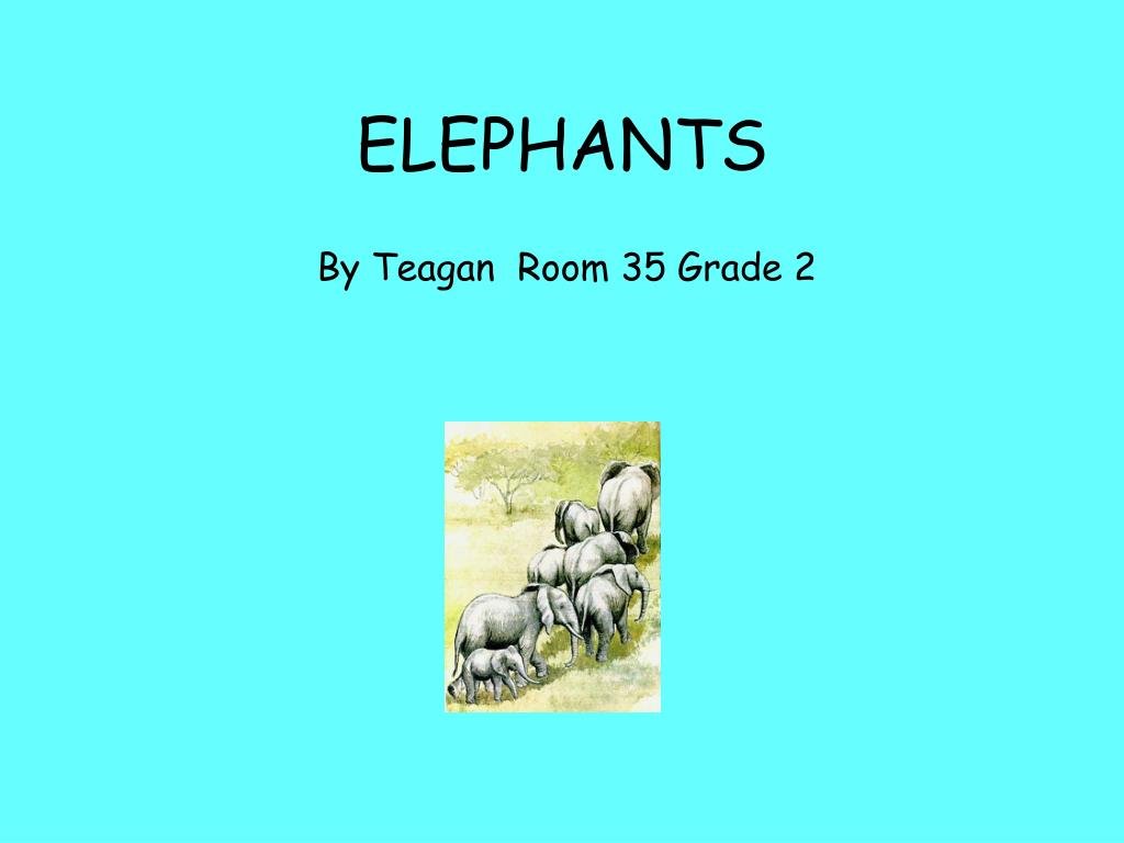 elephants l.