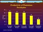 productivity of plantations eucalyptus
