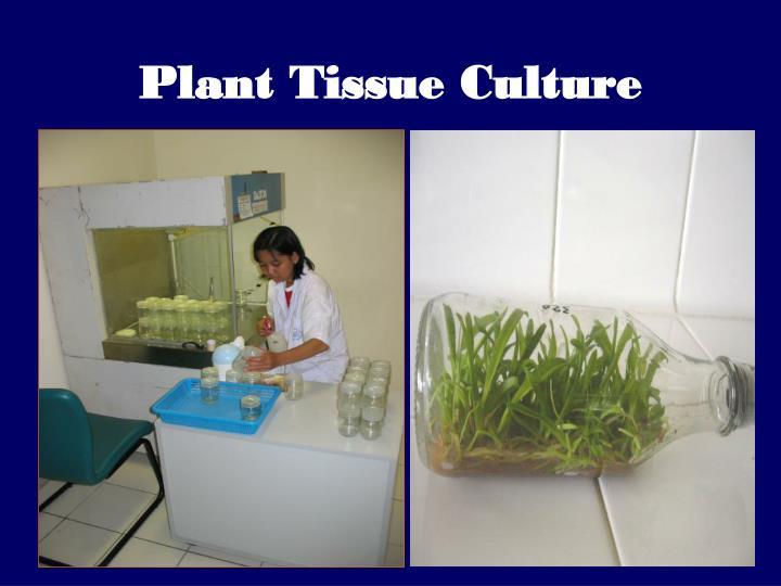 plant tissue culture n.