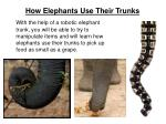 how elephants use their trunks