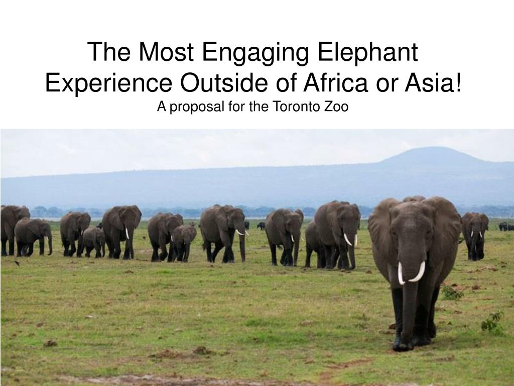 the most engaging elephant experience outside of africa or asia a proposal for the toronto zoo l.