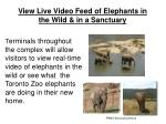 view live video feed of elephants in the wild in a sanctuary