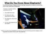 what do you know about elephants
