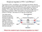 reciprocal regulation of pfk 1 and fbpase 1