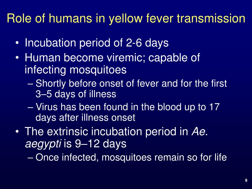 Role of humans in yellow fever transmission