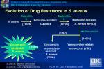 evolution of drug resistance in s aureus
