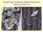 industrijski melanizam biston betularia selekcija protiv aa
