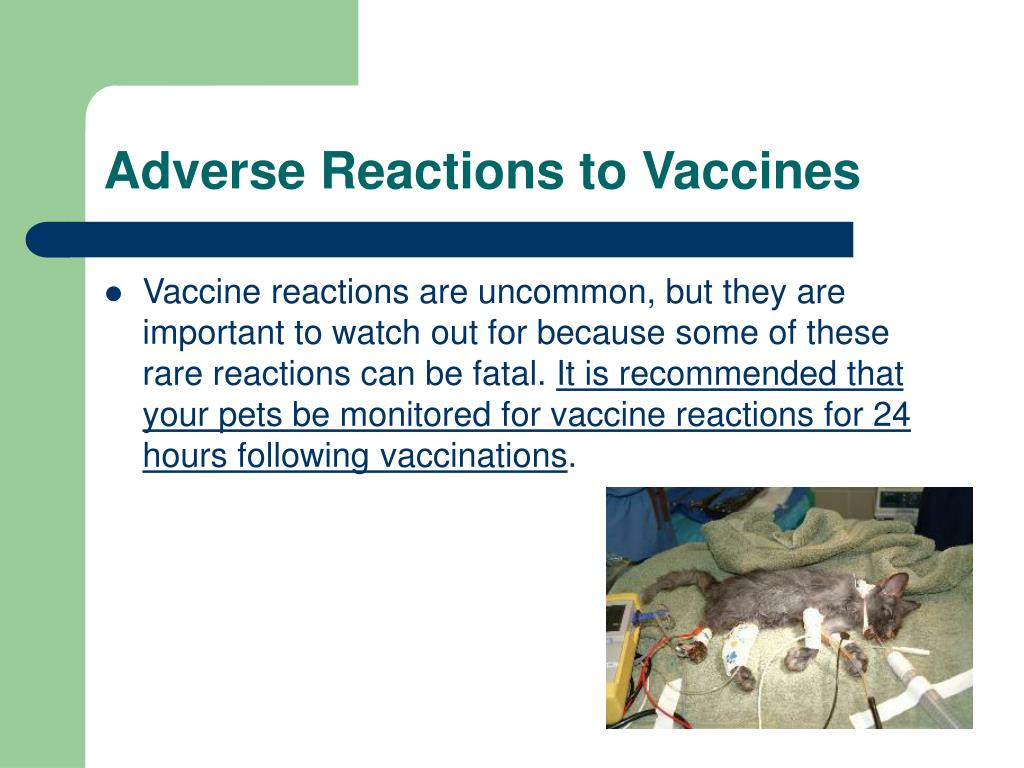 Adverse Reactions to Vaccines
