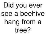 did you ever see a beehive hang from a tree