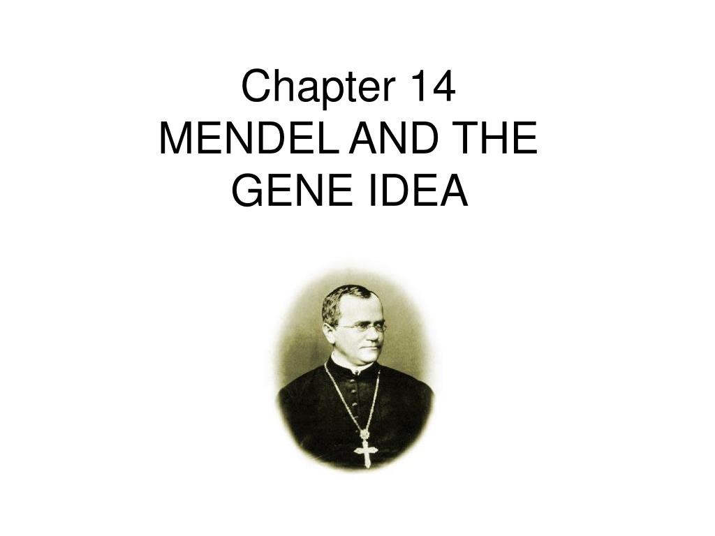 chapter 14 mendel and the gene idea l.
