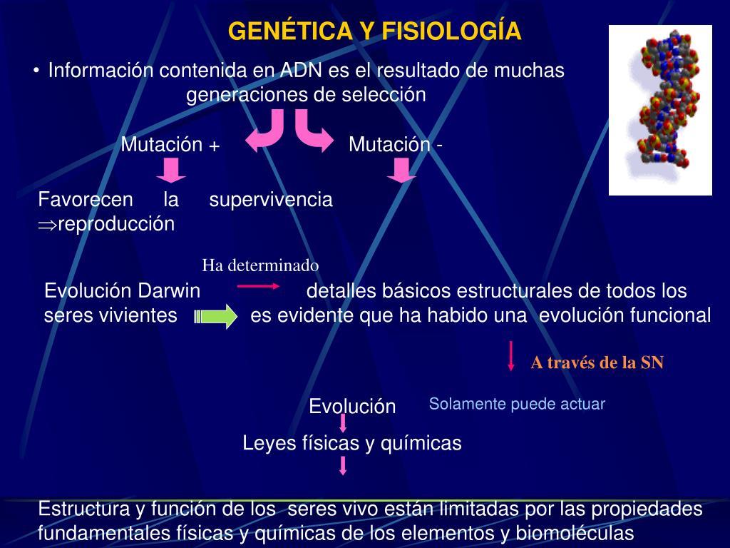Ppt Principios Básicos De Fisiología Powerpoint