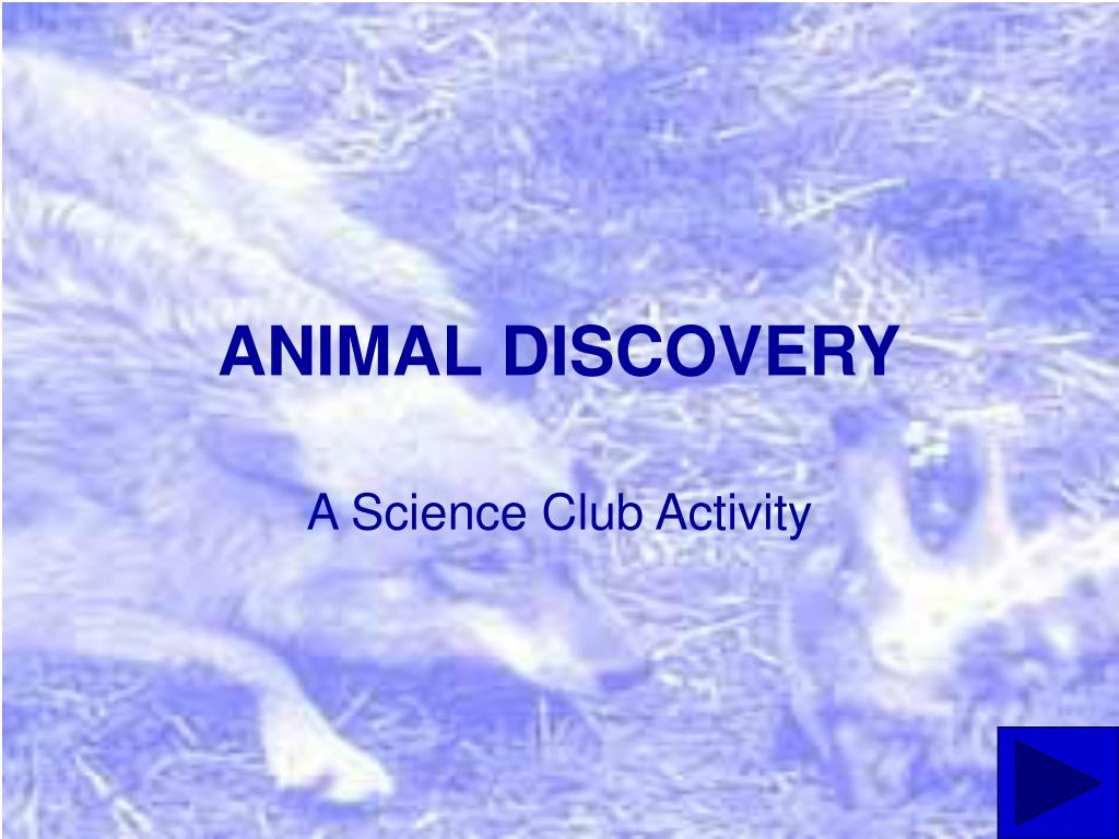 animal discovery l.