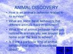 animal discovery2