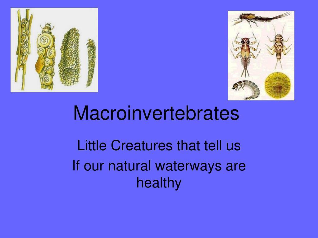macroinvertebrates l.
