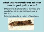 which macroinvertebrates tell that there is good quality water