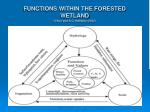 functions within the forested wetland g sun and s g mcnulty 2002