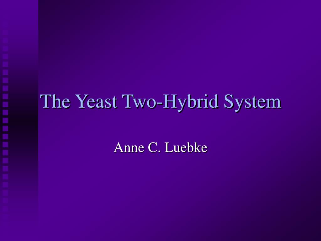 the yeast two hybrid system l.