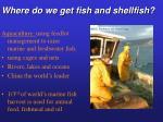 where do we get fish and shellfish37