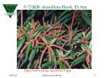 b densiflora hook et arn