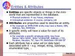 entities attributes