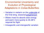environmental uncertainty and evolution of physiological adaptations in colias butterflies