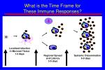 what is the time frame for these immune responses