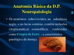anatomia b sica da d p neuropatologia