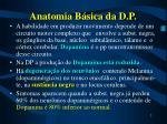 anatomia b sica da d p