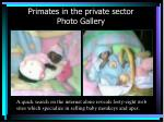 primates in the private sector photo gallery