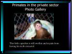 primates in the private sector photo gallery16