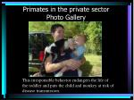 primates in the private sector photo gallery19