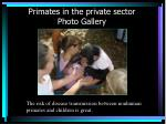 primates in the private sector photo gallery25