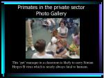 primates in the private sector photo gallery26