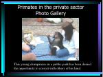 primates in the private sector photo gallery29
