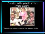 primates in the private sector photo gallery30